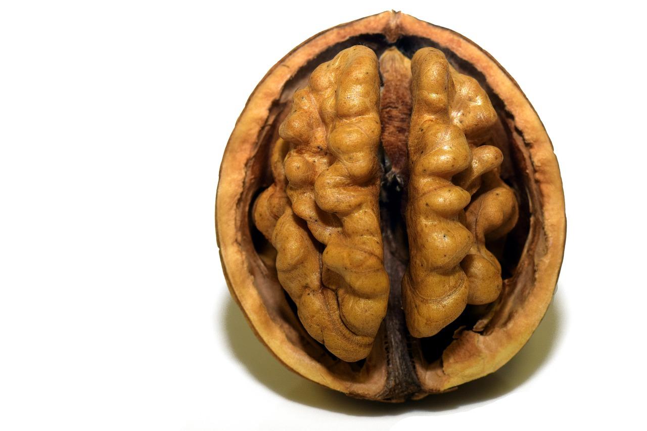 Mozek ořech